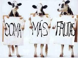 comer menos carne, comida vegana o vegetariana,