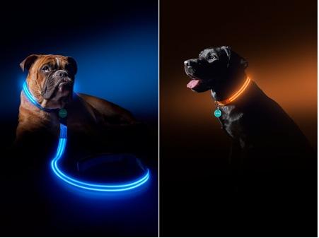 (2) Pettech-Poochlight de Squaker